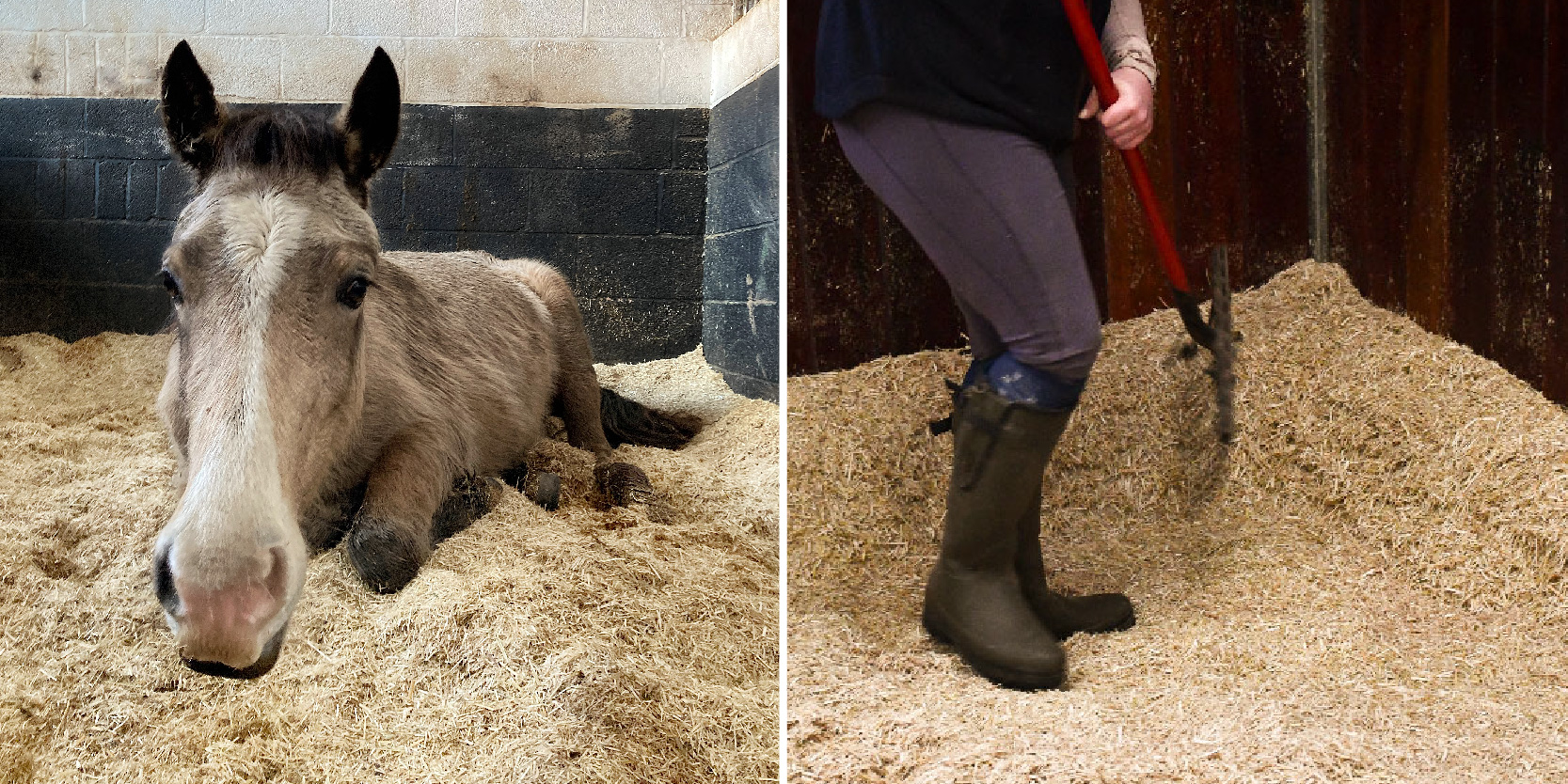 Miscanthus is comfortably the best bedding choice for horse owners who want clean and highly absorbent bedding